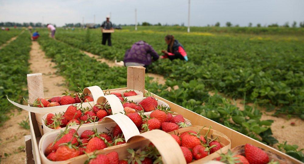 Noi reglementări pentru munca sezonieră în agricultură